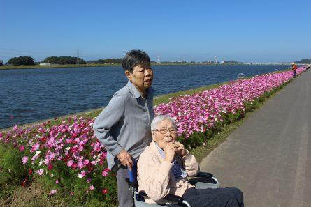 八幡西区山寺町 グループホームいきいき桜苑🌸 コスモス見学①
