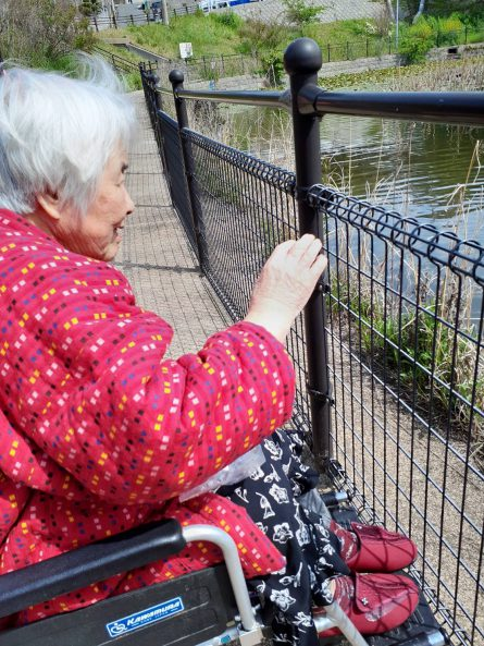 天気の良い日は【くちなし池】へお散歩。鯉が餌を求めて近寄ってます。