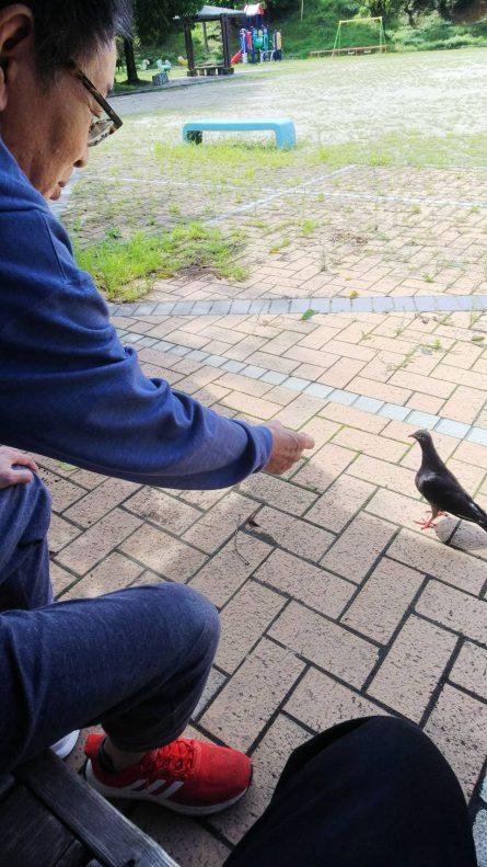公園にて・・・「こっちおいで。」鳩が近づいてきました。